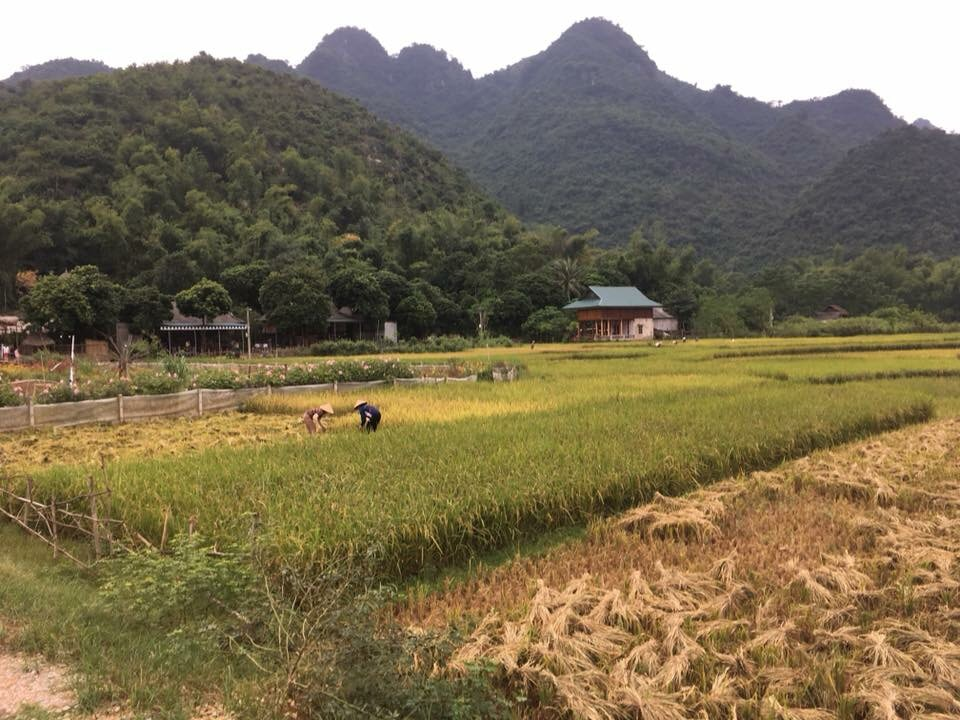 Best time to visit Mai Chau in June