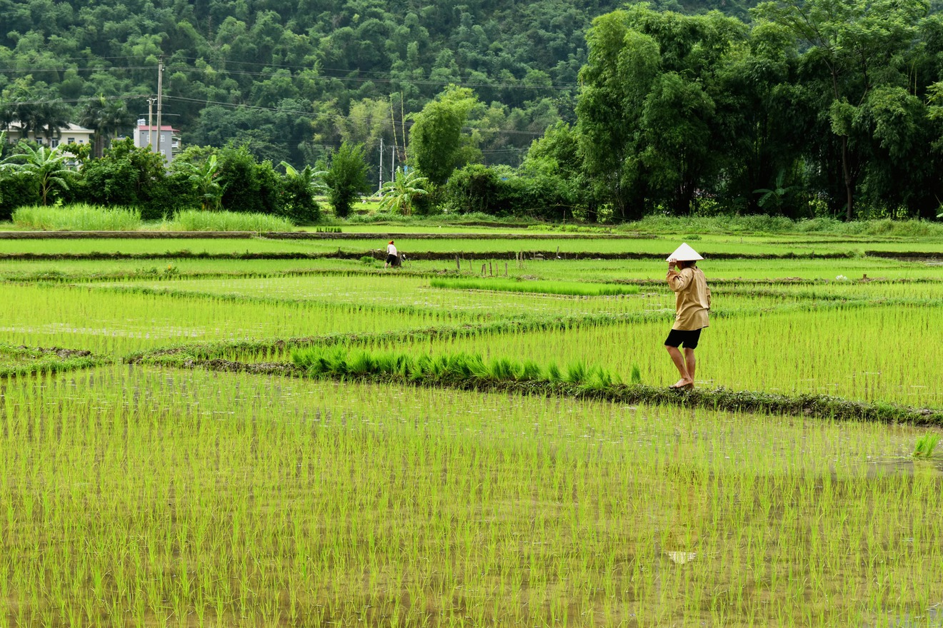 Best time to visit Mai Chau in July